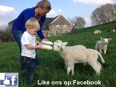 De Scheper op Facebook